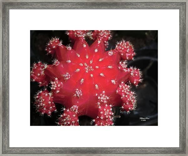 Cactus Beauty  Framed Print