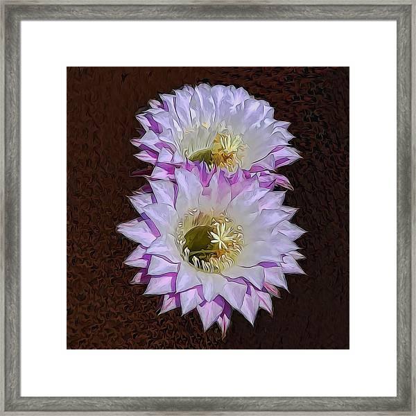 Cactus Flowers Framed Print