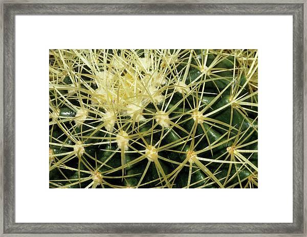 Cactus Spines Framed Print