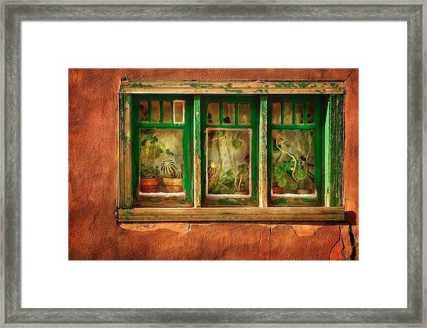 Cactus Window Framed Print