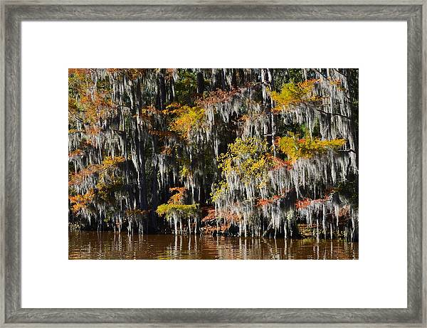 Caddo Lake 4 Framed Print