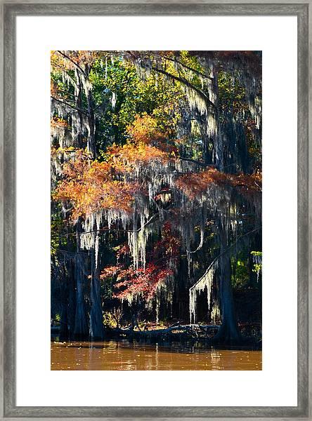 Caddo Lake 40 Framed Print