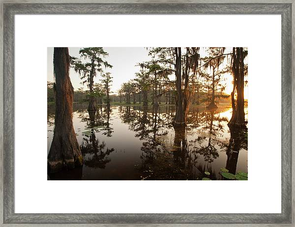 Caddo Lake, Texas At Sunrise Framed Print