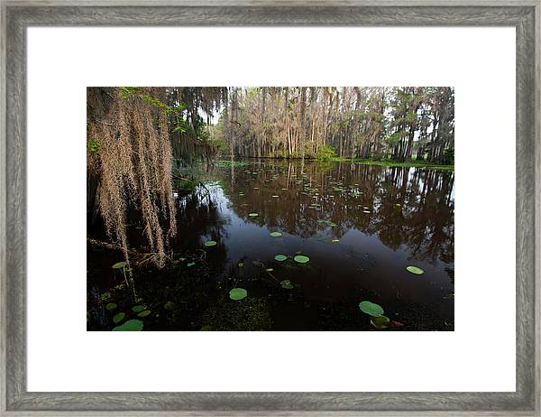 Caddo Lake, Texas's Largest Natural Lake Framed Print