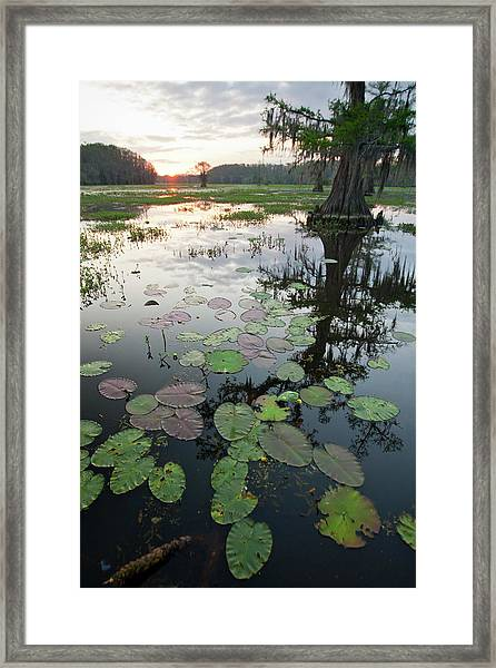 Caddo Lake, Texas's Largest Natural Framed Print