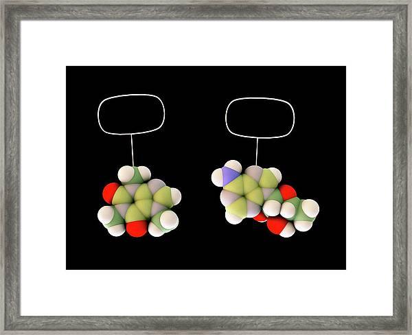 Caffeine And Adenosine Framed Print