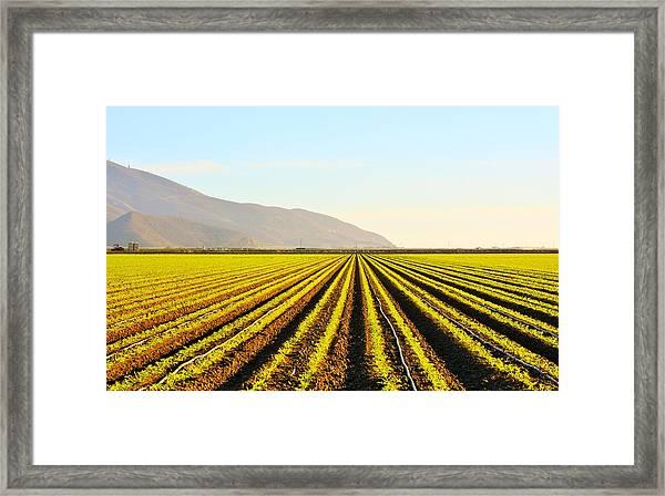Cali Grows Framed Print