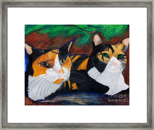 Calico Cats Framed Print