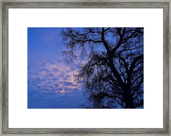 California Oak Sunrise Framed Print