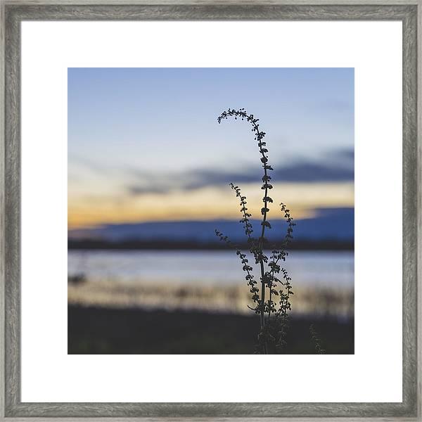California Spring Framed Print
