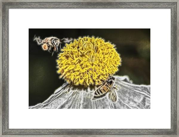 California Tree Poppy And Visitors Framed Print