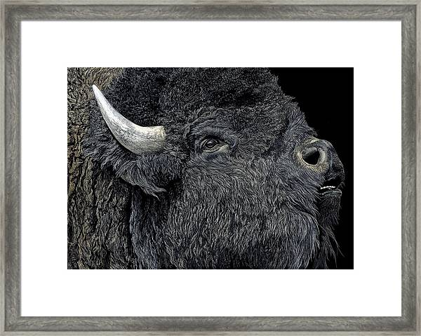 Call Of The Prairie Framed Print