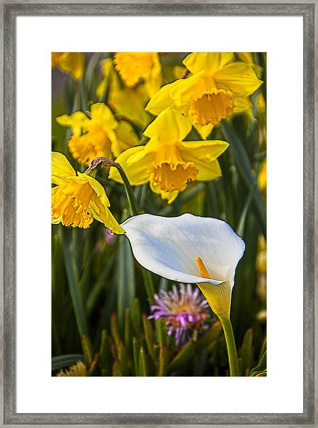 Calla Lily And Doffodils Framed Print