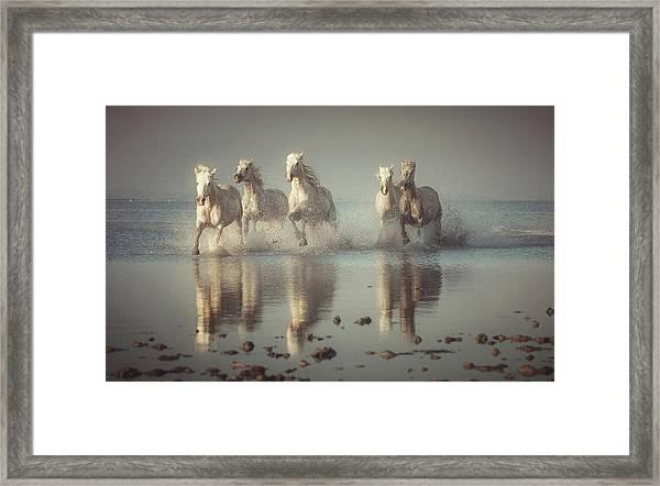 Camargue Horses Framed Print
