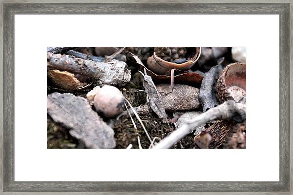 Camouflage Grasshopper Framed Print