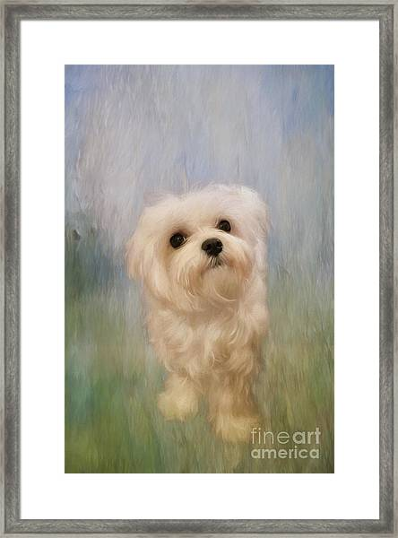 Framed Print featuring the digital art Can We Play Now by Lois Bryan