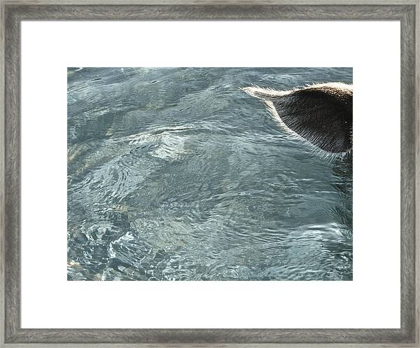 Can You Ear Me Now? Framed Print