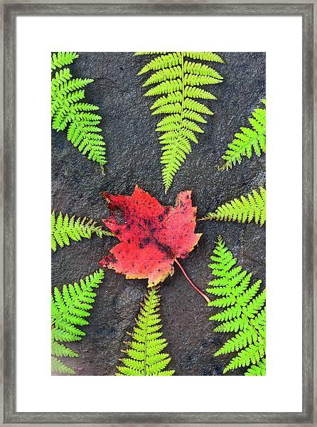 Canada, Nova Scotia, Cape Breton, Eight Framed Print by Patrick J. Wall