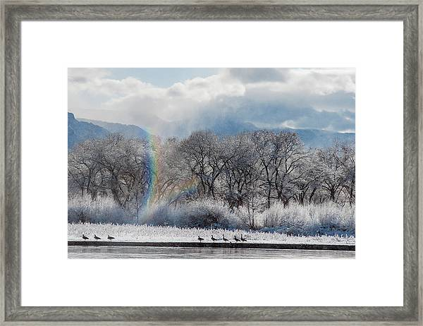 Canadian Geese, Rio Grande River, New Framed Print