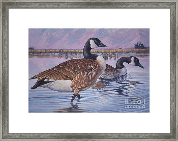 Canadian Geese Framed Print