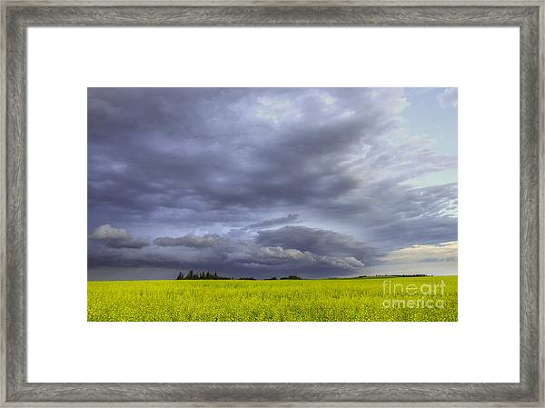 Canola And Storm Framed Print