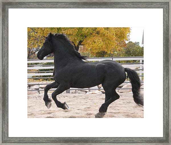 Canter In Spirit Framed Print