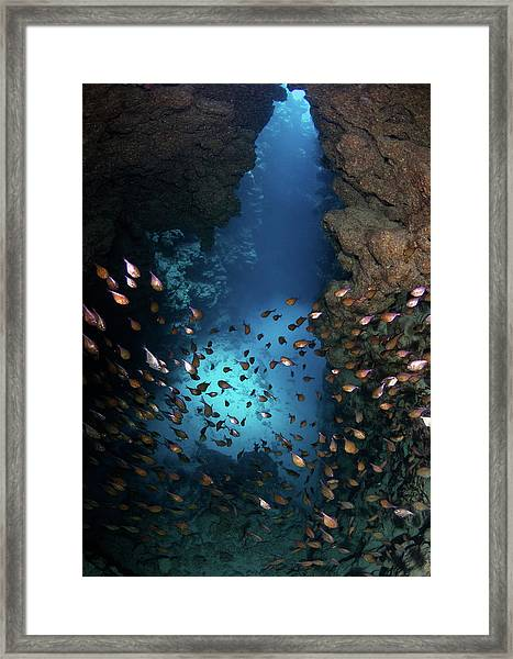 Canyon Framed Print by Nature, Underwater And Art Photos. Www.narchuk.com
