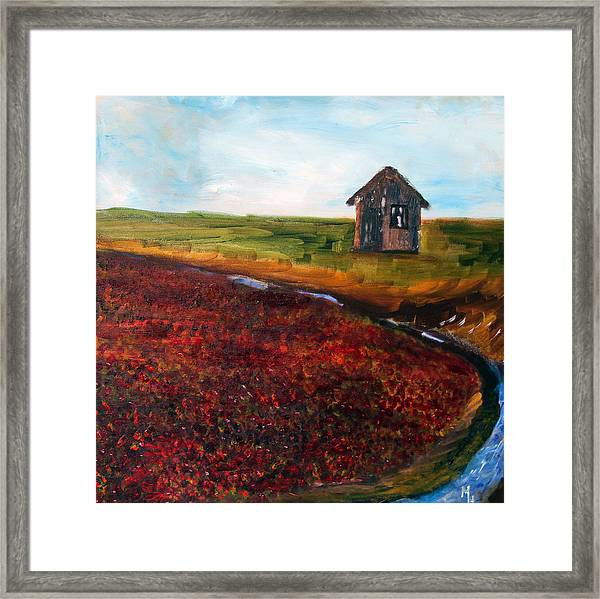Cape Cod Cranberry Bog Framed Print