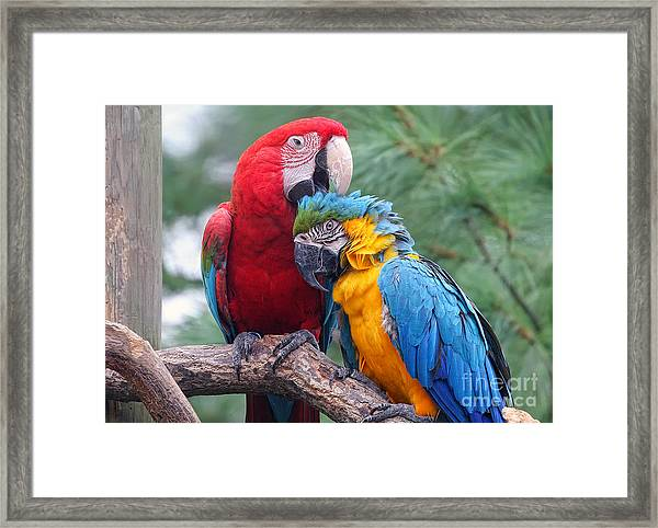 Grooming Session Framed Print