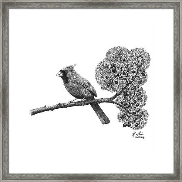 Cardinal Bird On Branch Framed Print by Adam Vereecke