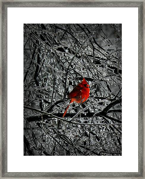 Framed Print featuring the photograph Cardinal In An Ice Storm 001 by Lance Vaughn