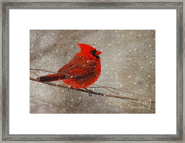 Framed Print featuring the photograph Cardinal In Snow by Lois Bryan