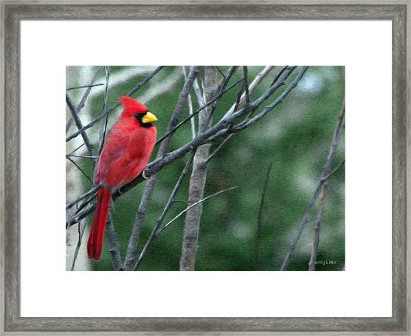 Cardinal West Framed Print
