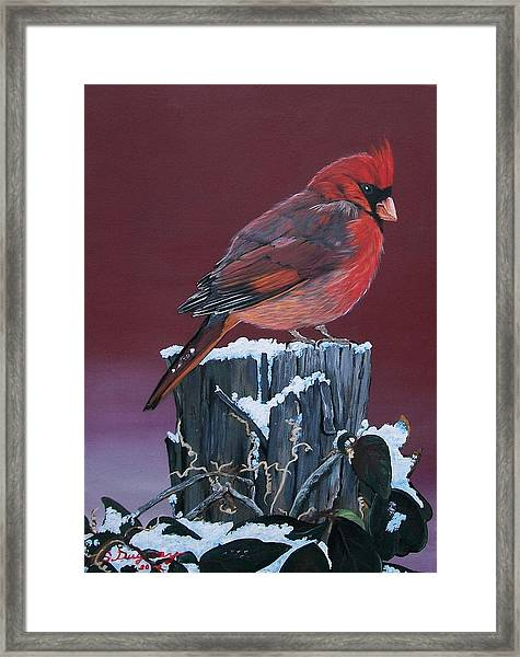 Cardinal Winter Songbird Framed Print