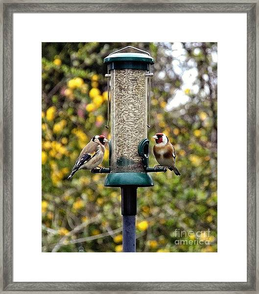 Carduelis Carduelis 'goldfinch' Framed Print