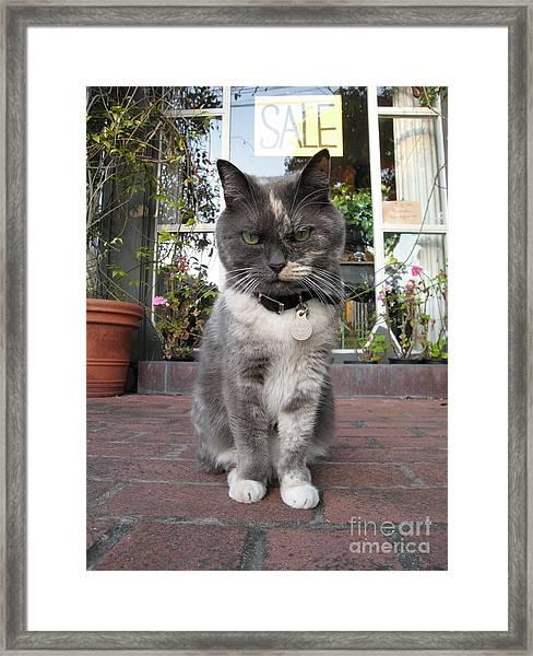 Carmel Shopkeeper Framed Print