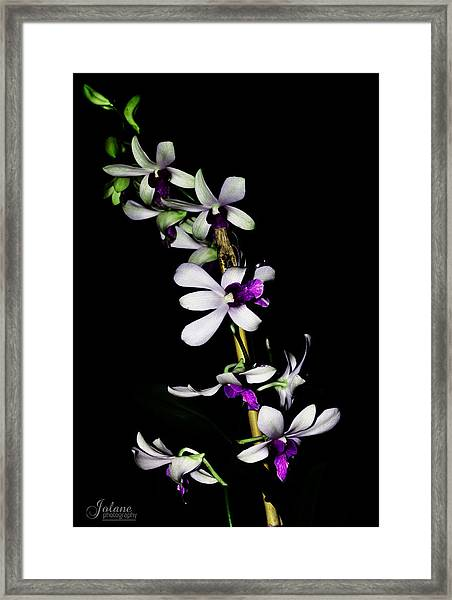 Carol's Orchid Framed Print
