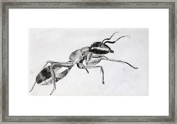 Carpenter Framed Print