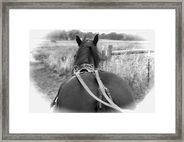 Framed Print featuring the photograph Carraige View Horse by William Havle