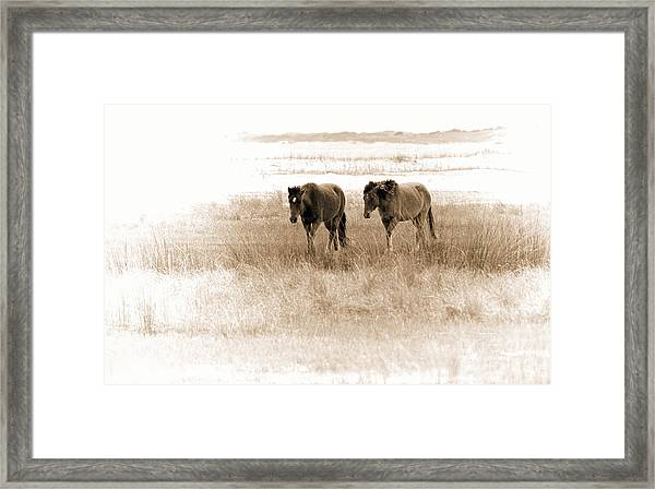 Carrot Island Ponies Framed Print