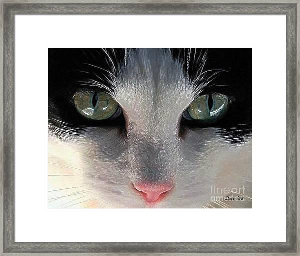 Casey Eyes Framed Print