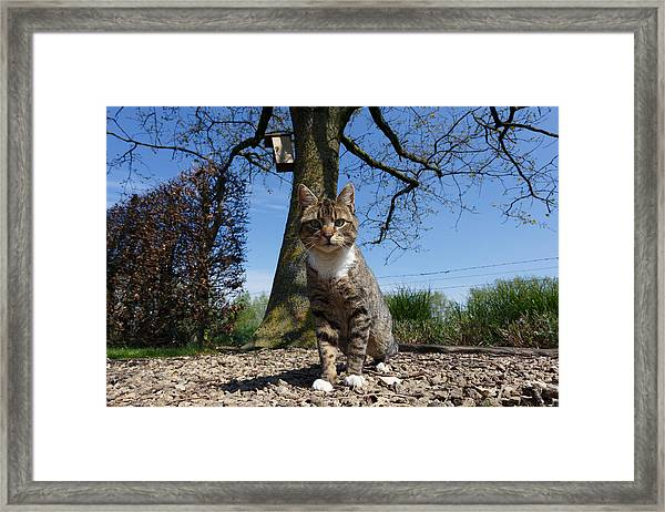 Cat And Bird Framed Print