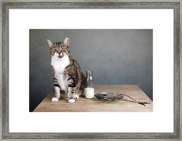 Cat And Herring Framed Print