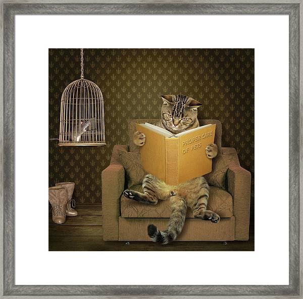 Cat And His Pet..... Framed Print by Iryna Kuznetsova (iridi)