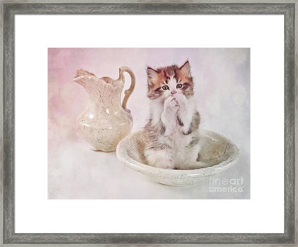 Cat Bath II Framed Print