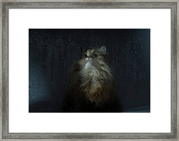 Cat By Rainy Window Framed Print by Benjamin Torode