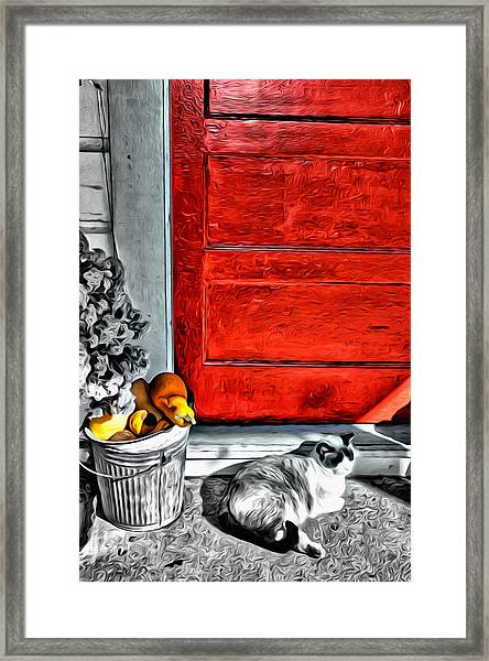 Cat By The Red Door Framed Print