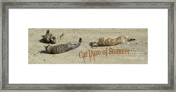 Cat Daze Of Summer Framed Print