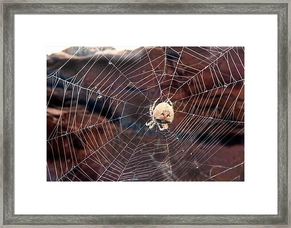 Cat Faced Spider Framed Print