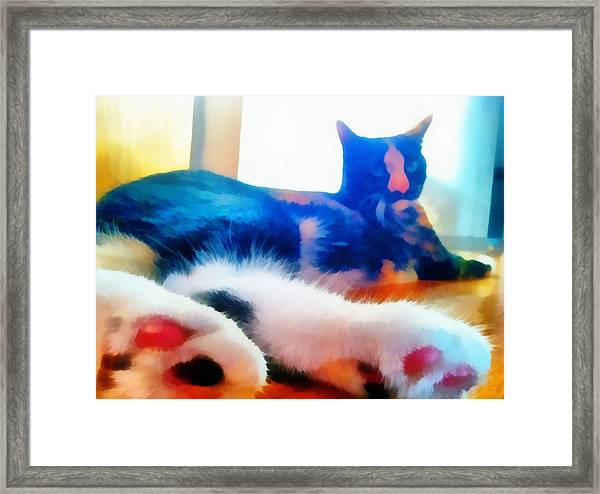 Cat Feet Framed Print